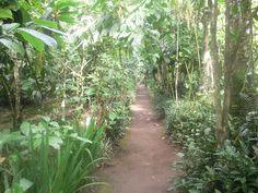 Jungle, Bali Indonesia