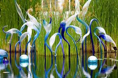Dallas Arboretum, next May, here I go! I will love to watch Dale Chihuly glass sculpture exhibition! Dale Chihuly, Blown Glass Art, Sea Glass Art, Stained Glass Art, Fused Glass, Nashville, Dallas Arboretum, Wow Art, Blue Heron
