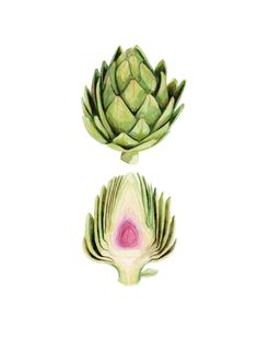 Archival quality print of my original illustration featuring a beautiful green artichoke sliced to reveal the purple center. This illustration