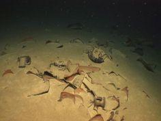 Roman-era shipwrecks found in deep waters off Greece