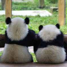 How adorable!! Fluffy butts!!