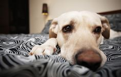 5 Genius Solutions For Your Pup's Separation Anxiety