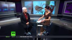 Why the Government is Suppressing the Lyme Disease Epidemic   Interview with Lorraine Johnson - YouTube