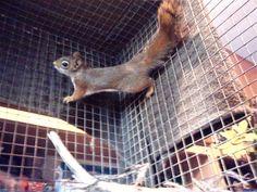 American Red Squirrel, Parrot, Bird, Animals, Parrot Bird, Animales, Animaux, Birds, Animal