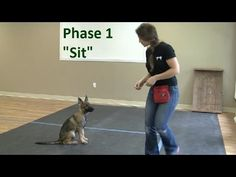 "How to Train a Dog to ""Sit"" (K9-1.com)"