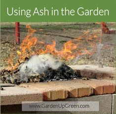 Discover how using ash in the garden can be a good thing.