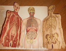 c1890 Antique Medical Book Human Anatomy Model with Fold Out Body Parts