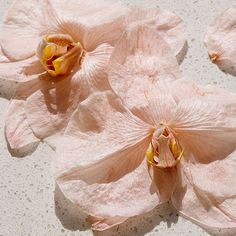 Tan delicadas ellas, las magnolias 🌺🌺🌺 inspo via . Terra Cotta, Matisse, Pink Nature, Peach Aesthetic, Dreamy Photography, Pastel Palette, Flower Wallpaper, Summer Vibes, Color Pop
