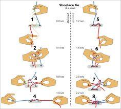 Knots (Diagrams © A.Jöstel)