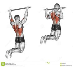 Illustration about End of the upper block narrow grip. Exercising for bodybuilding Target muscles are marked in red. Illustration of biceps, shoulder, down - 44124246 Traps Workout, Gym Workout Chart, Bar Workout, Workout Days, Gym Workout Tips, Workout Men, Fitness Workouts, Forma Fitness, Back Exercises