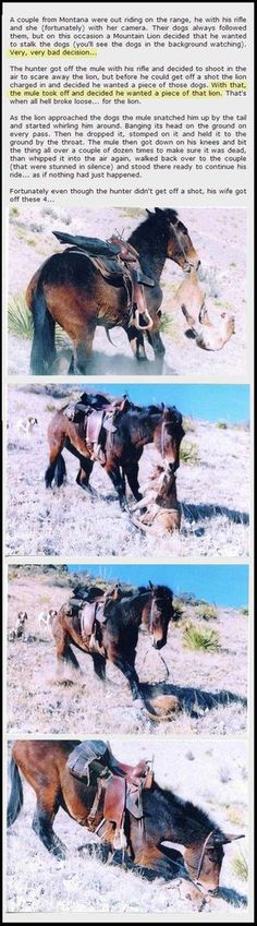 Didn't know where to pin this.... lesson here...don't mess with a mule.. WHO KNEW..!!