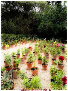 Macetas con diferentes flores y plantas junto al Pabellón de Villanueva. Jardín Botánico. Pots with differents flowers and plants next to Villanueva Pavillion Botanical Gardens Madrid