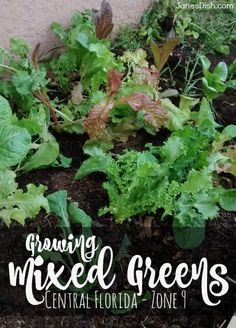 A Por And Easy To Grow Winter Crop In Florida Broccoli Is Incredibly Nutritious January Plant Of The Month Pinterest Garden