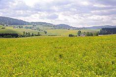 Herrliche Aussicht von der TraumArena. (© Guglwald) Vineyard, Mountains, Nature, Travel, Outdoor, Communities Unit, Hiking, Outdoors, Naturaleza