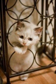 Kitten's Favorite Playground(ᵔᴥᵔ)