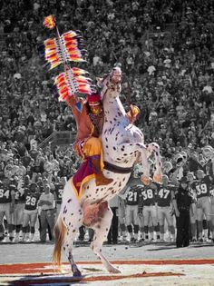 One of the most spectacular traditions in all of college football occurs in Doak Campbell Stadium, the home of the Florida State University Seminoles. Bill Durham, a 1965 graduate of FSU charges down mid field riding an Appaloosa named Renegade & plants a flaming spear at mid field. Durham sought & obtained approval of the Seminole Tribe of Florida for the portrayal of Osceola,