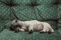 Good Night  Buenas Noches  #Puppy #Cachorrito #Sleep #Dormir