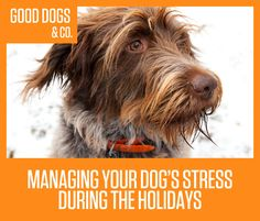 Helpful tips on managing that holiday stress for your dog.