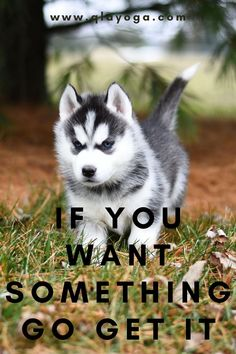 """""""If you want something, go get it"""" - Chris Gardner  #success #motivation #entrepreneur #business #inspiration #goals #mindset #motivationalquotes #quotes #believe #positivevibes  #successquotes  #inspirationalquotes  #startup #successful #hardwork #nevergiveup #gogetit If You Want Something, Dog Stories, Sites Like Youtube, Wonder Quotes, Police Dogs, Yoga Quotes, Never Give Up, Positive Vibes, Awakening"""