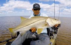 Quick Trick To Catch More Snook Using Paddletails Best Fishing, Fishing Tips, Fishing Lures, Fishing Tournaments, Fishing Pictures, Big Fish, Saltwater Fishing, Fishing Jig, Sea Angling