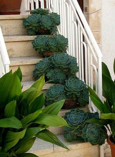 Succulents.  Really like this display!  ~
