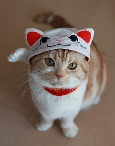 Maneki neko hat for cats? Just too cute for words -look at this face ! (Cat them the hat) Kitty does seem to have a bit of a 'tude, must be hat with special powers. Happens to me ALL the time!
