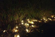 Light up your garden with LED lighting. Photo: Henrik Bodin