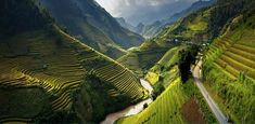 Rice Terrace Fields in Mu Cang Chai, Vietnam