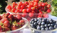 groenten en fruit van het seizoen per maand   Rubriek.nl