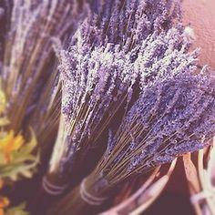 lavendar. Bunches. Natural Decor. Fragrance. Purple.