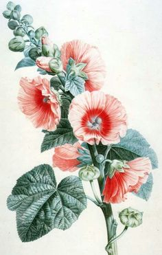 Image result for hollyhock tattoo