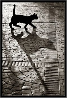 sombra-de-gato.jpg (509×750)