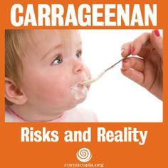 Do you eat or feed your children products with carrageenan? Try purchasing a nondairy milk, yogurt or processed meat without it. It can show up virtually anywhere in the processed food chain, used to bind ingredients—even organic ones. But is it safe?  More here: http://www.cornucopia.org/2013/12/carrageenan-risks-reality #Carrageenan #FoodSafety #StomachAche #DigestiveIssues #Digestion #Food #Yogurt