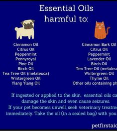 Essential oils toxic to dogs