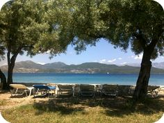 relax under the shadow of the olive trees