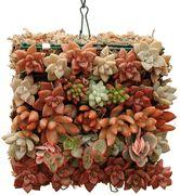 Succulent Tile - Cage