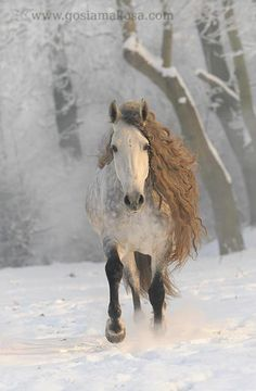 Horse. She is an Angel without wings, her forelock and mane, her halo. http://www.annabelchaffer.com/categories/Equestrian-Gifts/