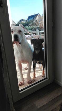 Hunde Foto: Sylvie und Whoopie und Diego - Ying und Yang Hier Dein Bild hochladen: http://ichliebehunde.com/hund-des-tages  #hund #hunde #hundebild #hundebilder #dog #dogs #dogfun  #dogpic #dogpictures