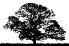 1023x682 Oak Tree Silhouette Photo by trinity8419 | Photobucket