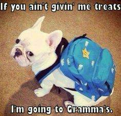 Thats what i woyld say if i was a dog