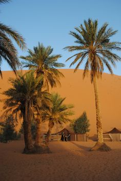 Camp in the Desert Fantasy Landscape, Landscape Photos, Desert Sahara, Places In Egypt, Desert Area, Deserts Of The World, View Wallpaper, Visit Egypt, Universe Art