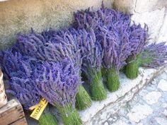 Lavendel Lavander, Lavender Color, Lilac, Purple, Lavender Cottage, Lavender Fields, Calendula, Harvest Time, Stunningly Beautiful