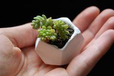Aus Modelliermasse kleine Pflanzgefäße basteln