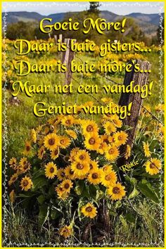 Good Morning Greetings, Good Morning Wishes, Good Morning Quotes, Afrikaanse Quotes, Goeie Nag, Goeie More, Special Quotes, Sleep Tight, Cocktail Recipes