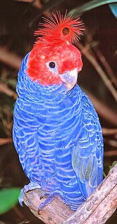 luisella munaron. I've never seen a bird like this. What a beauty!