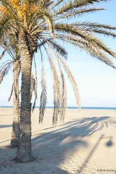 La Mas Bonita  Valencia strand ©BintiHome