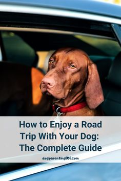 One of the keys to having a great road trip with your dog is planning and list making. This guide will help ensure you have an awesome time together. #travelingwithdogs #greatadvice #travelwithdogs Dog Health Tips, Pet Health, Pet Sitters International, Dog Ramp, Cute Dog Photos, How To Treat Anxiety, Guide Dog, Dog Travel, Dog Boarding