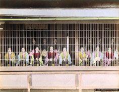 Tokyo yakınlarında, eskiden genelevlerin merkezi olarak bilinen Yoshiwara'da sergilenen hayat kadınları, 1882.