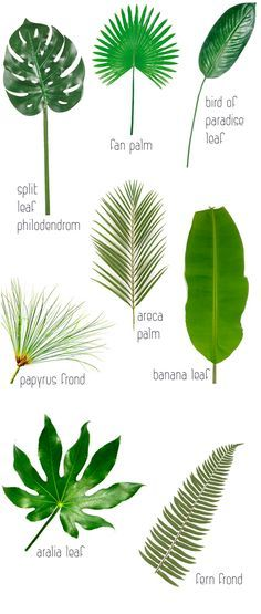 freyashop | Тренды: Листья тропических растений в декоре | http://freyashop.com.ua