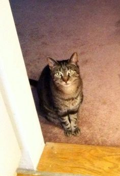 ***HAVE YOU SEEN ME*** **MISSING** RIDGEFIELD,CT Missing! My neighbor's cat, Oliver, has been missing from Fox Hill condos in Ridgefield, CT since Sunday. Please PM Kim Staiti or call her at 203-829-8031 if you have seen him or have any ideas on where to look. Thank you! — with Kim Staiti.